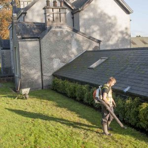 Fully-grown-hedges-ireland-11