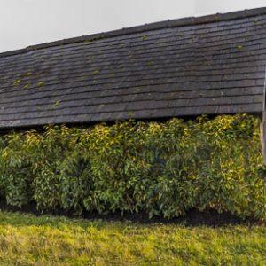 Fully-grown-hedges-ireland-12