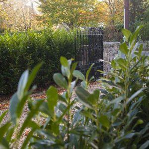 Fully-grown-hedges-ireland-15