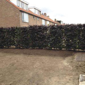 Fully-grown-hedges-ireland-17