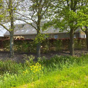 Fully-grown-hedges-ireland-19