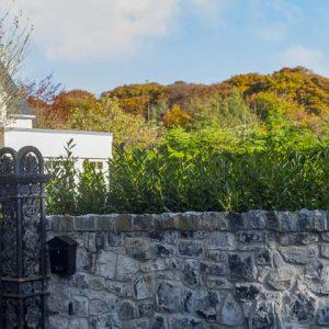 Fully-grown-hedges-ireland-22