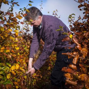 Fully-grown-hedges-ireland-4