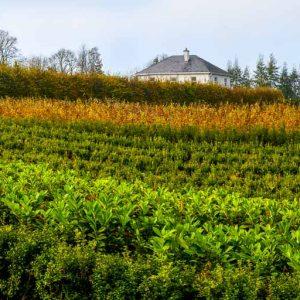 Fully-grown-hedges-ireland-5