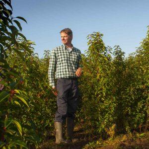 Fully-grown-hedges-ireland-7