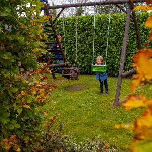 Fully-grown-hedges-ireland-9